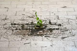 natural-wonders-(plant-close)-web